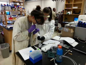 Students at work on a wet-lab experiment